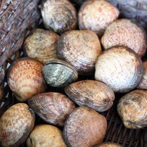 Amandes coquillage poissonnerie en ligne l'Étrille
