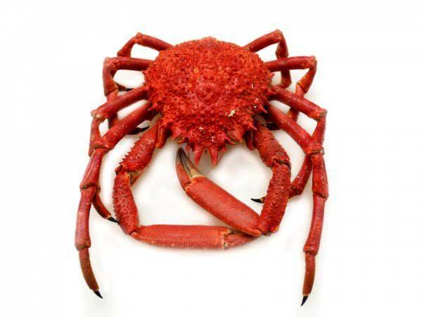 Araignée de mer Poissonnerie en ligne L'éTRILLE