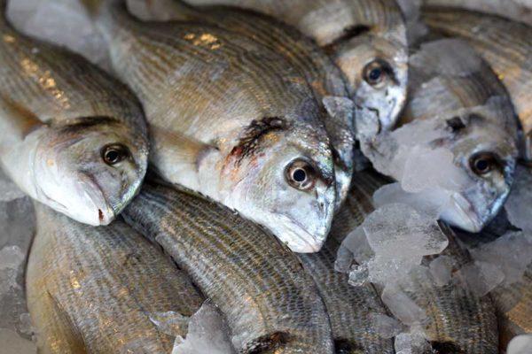 Dorade de Méditerranée Poissonnerie en ligne L'Étrille