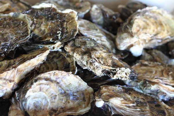 Vente en ligne huître de leucate