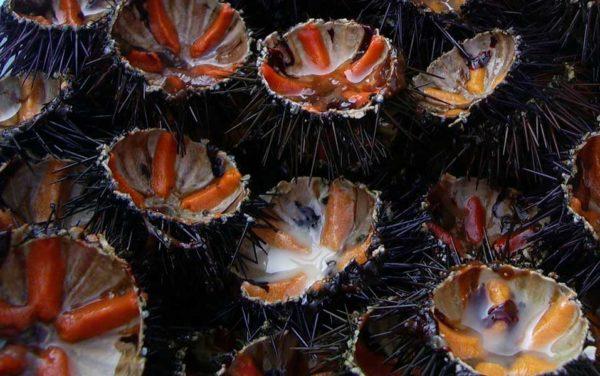 oursin de Méditerranée Poissonnerie en ligne L'éTRILLE