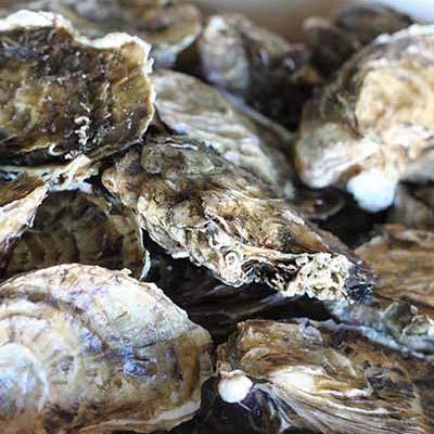 Huîtres en ligne huîtres de Leucate L'éTRILLE